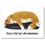 computer_keyboard_cat