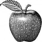 apple_red_delicious