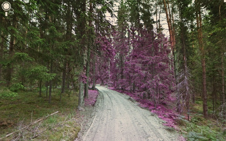 a-beautiful-image-of-a-forest-covered-in-the-purple-shield-plant