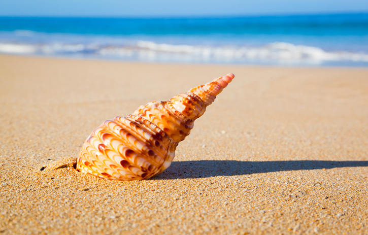 Shell on Exotic Beach