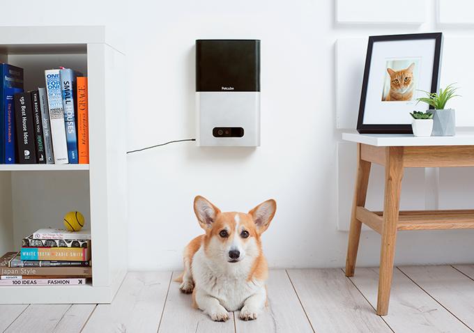 Petcube снова вышел на Kickstarter и собирает $200 000 на новые гаджеты