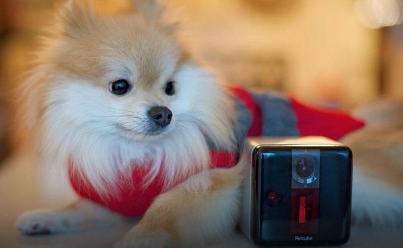 Украинский Petcube занял первое место на Wearable Tech Show, обойдя Nest и Amazon Alexa